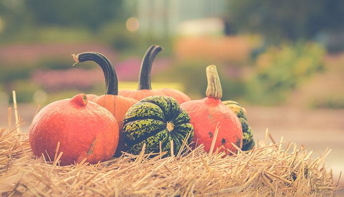 El otoño, mi estación favorita – Dosis de inspiración semanal