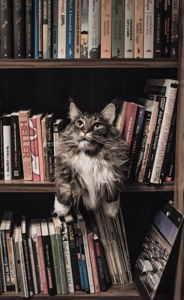books and cat